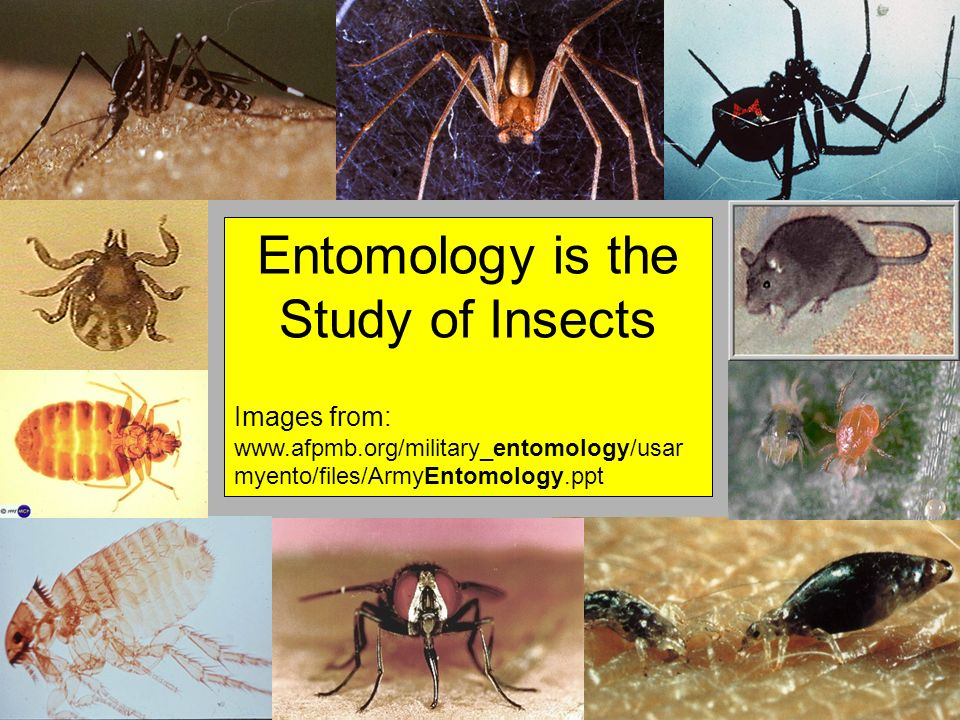 Entomology is the Study of Insects Images from: www.afpmb.org/military_entomology/usar myento/files/ArmyEntomology.ppt