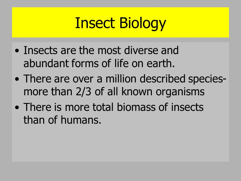 Bloat Swells due to gases produced by bacteria Temperature rise of the corpse Flies still present – house flies join –(Muscidae)