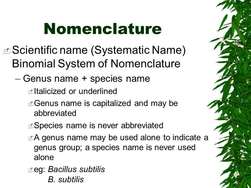 Nomenclature Scientific name (Systematic Name) Binomial System of Nomenclature –Genus name + species name Italicized or underlined Genus name is capit