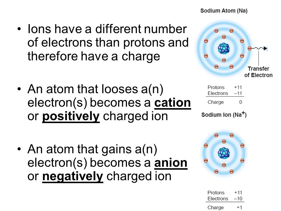 Ions have a different number of electrons than protons and therefore have a charge An atom that looses a(n) electron(s) becomes a cation or positively
