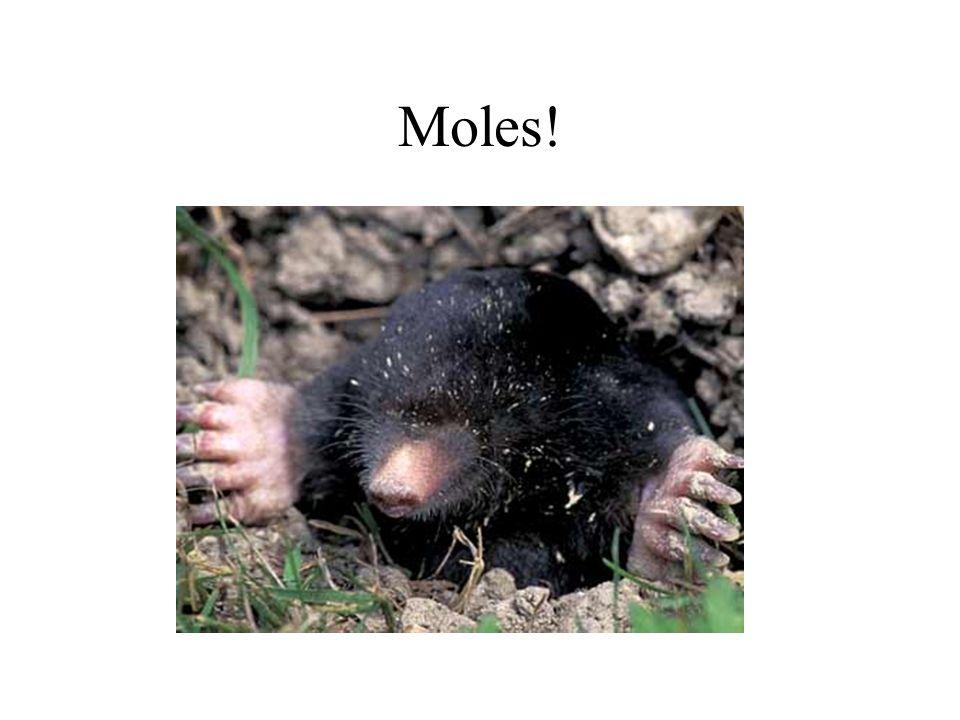 Moles!