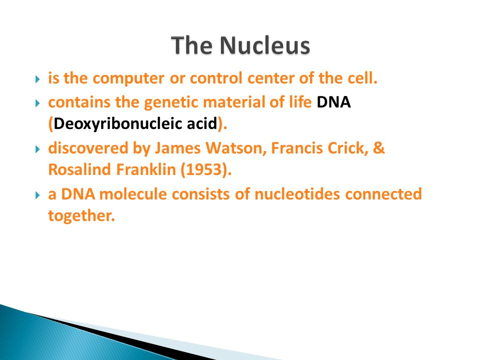 is the computer or control center of the cell. contains the genetic material of life DNA (Deoxyribonucleic acid). discovered by James Watson, Francis