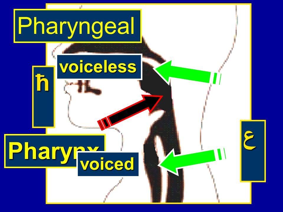 Pharynx ћ ع Pharyngeal voiceless voiced