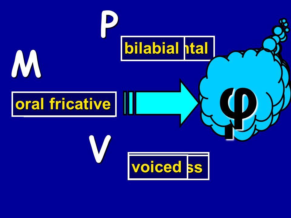 bilabial oral stop voiced b P M V voiceless p nasal stop m alveolar n velar η oral stop g voiceless k oral fricative x labiodental f voiced v bilabial