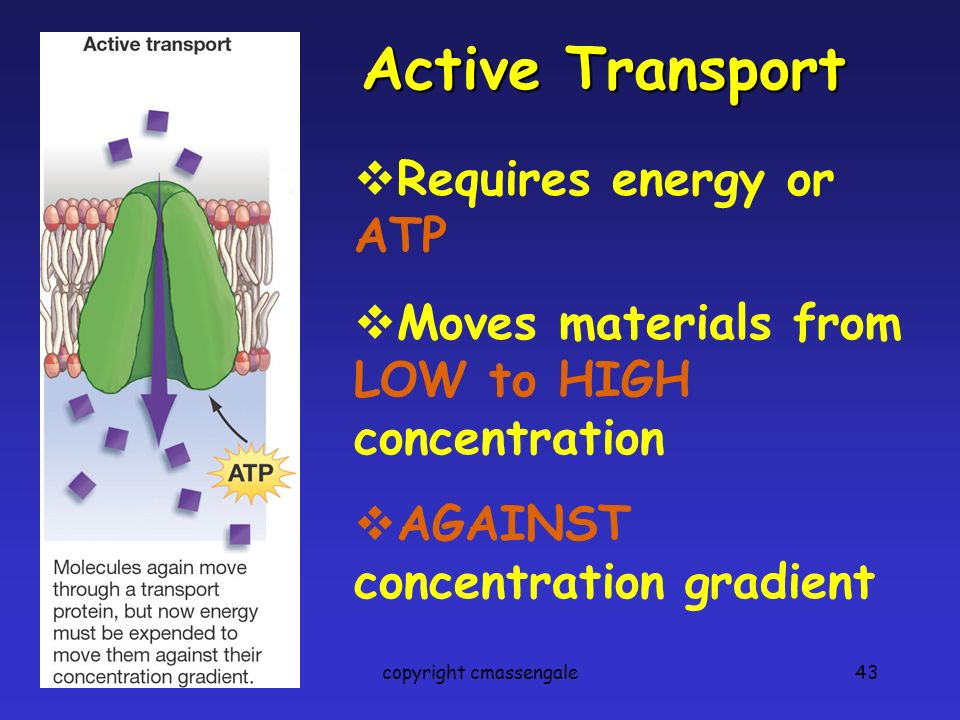 43 Active Transport Requires energy or ATP Moves materials from LOW to HIGH concentration AGAINST concentration gradient copyright cmassengale