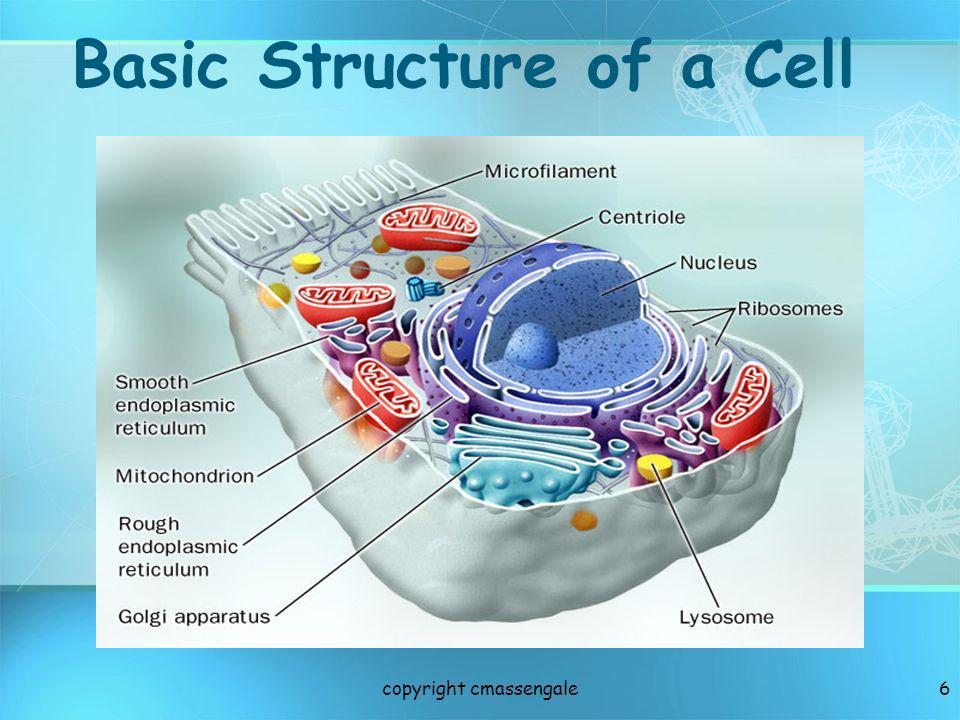 6 Basic Structure of a Cell copyright cmassengale
