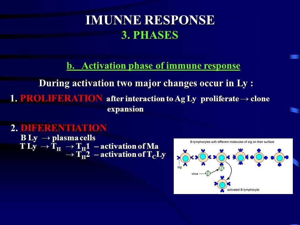IMUNNE RESPONSE IMUNNE RESPONSE 3. PHASES 3. PHASES a. Cognitive b. Activation c. Efector a. Cognitive phase of immune response a. Cognitive phase of