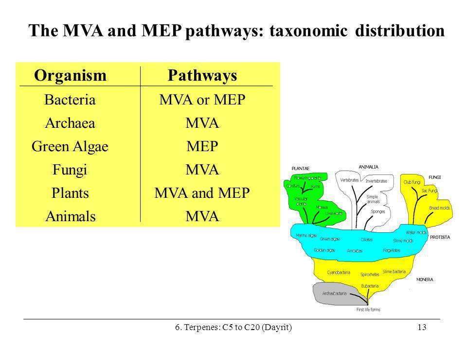6. Terpenes: C5 to C20 (Dayrit)13 The MVA and MEP pathways: taxonomic distribution OrganismPathways BacteriaMVA or MEP ArchaeaMVA Green AlgaeMEP Fungi