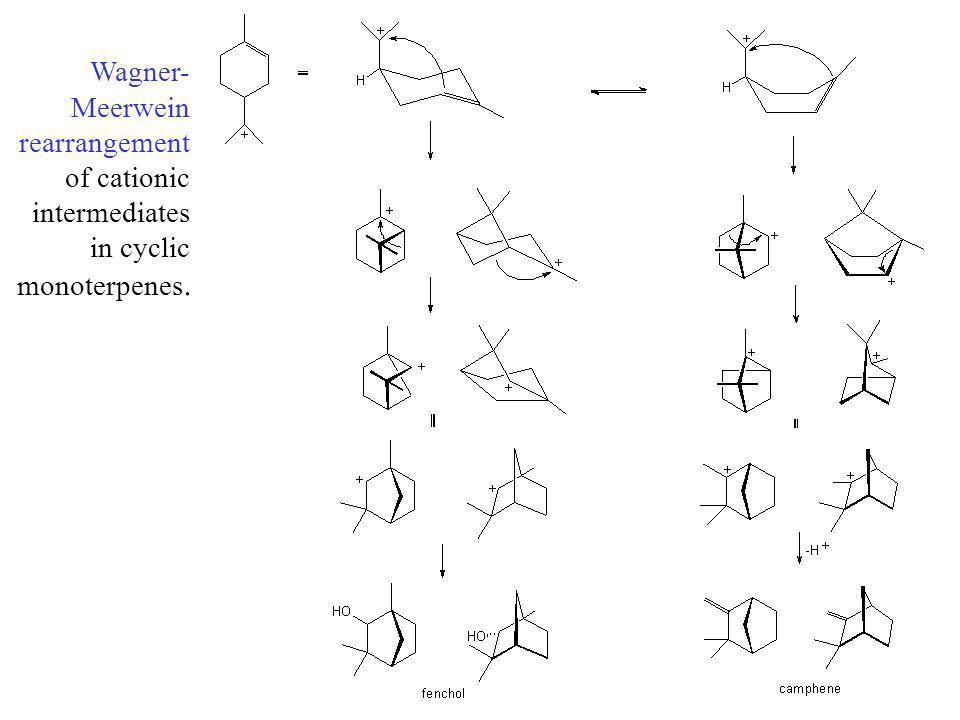Wagner- Meerwein rearrangement of cationic intermediates in cyclic monoterpenes.