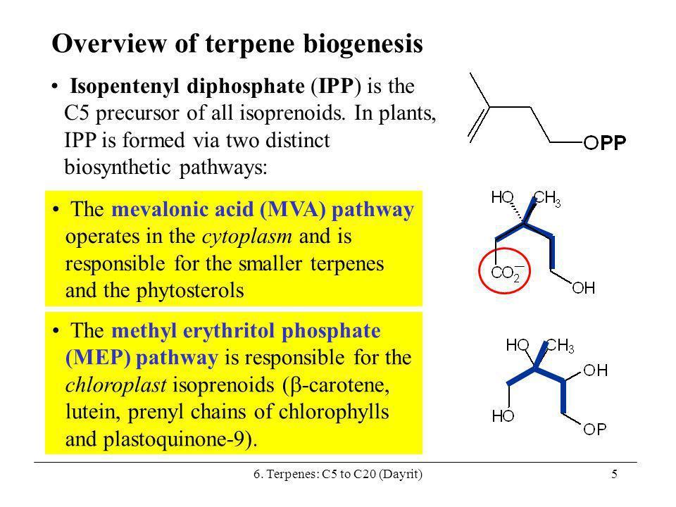 6. Terpenes: C5 to C20 (Dayrit)5 Overview of terpene biogenesis Isopentenyl diphosphate (IPP) is the C5 precursor of all isoprenoids. In plants, IPP i