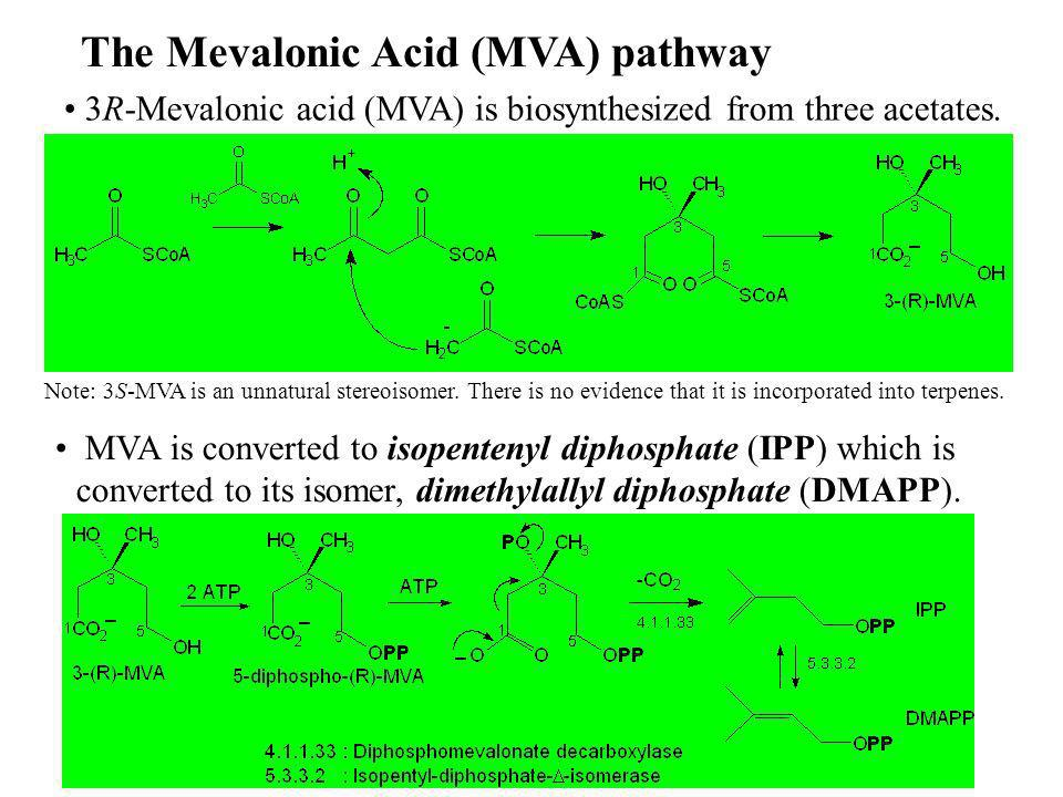 6. Terpenes: C5 to C20 (Dayrit)6 The Mevalonic Acid (MVA) pathway 3R-Mevalonic acid (MVA) is biosynthesized from three acetates. MVA is converted to i