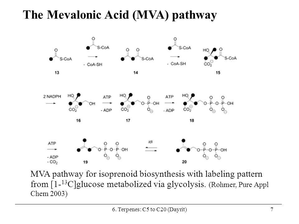 The Mevalonic Acid (MVA) pathway MVA pathway for isoprenoid biosynthesis with labeling pattern from [1- 13 C]glucose metabolized via glycolysis. (Rohm