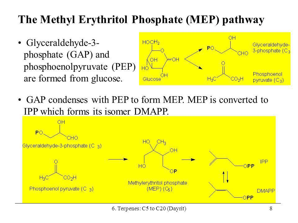 8 The Methyl Erythritol Phosphate (MEP) pathway GAP condenses with PEP to form MEP. MEP is converted to IPP which forms its isomer DMAPP. Glyceraldehy