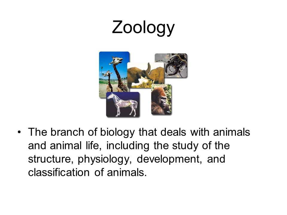 The branch of biology that deals with microorganisms and their effects on other living organisms Microbiology