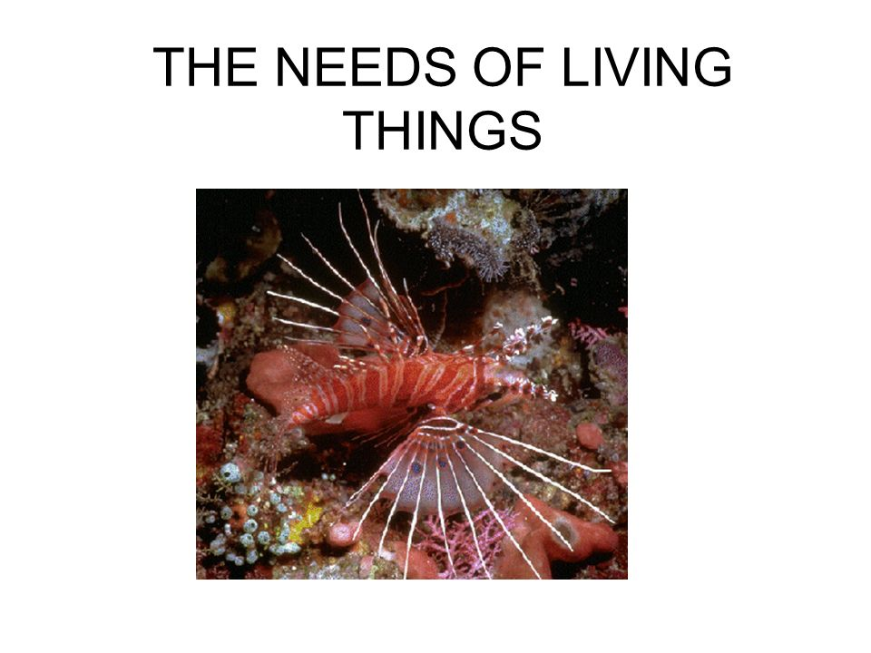 8. Taken as a group, living things change over time. Living things adapt to their environment. An adaptation is a charachteristic that helps an organi