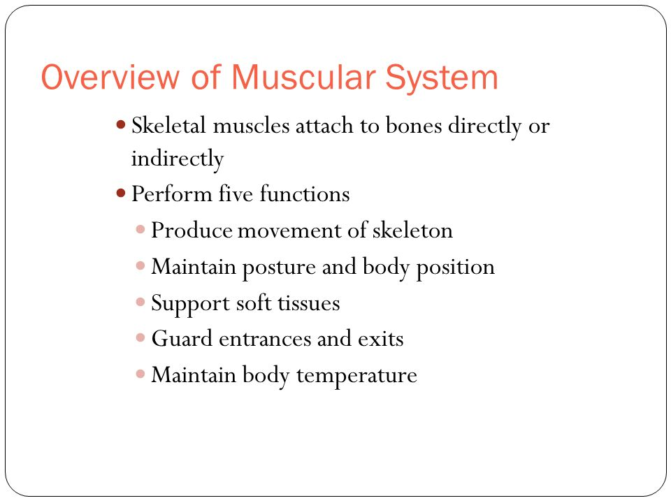 Overview of Muscular System Skeletal muscles attach to bones directly or indirectly Perform five functions Produce movement of skeleton Maintain postu