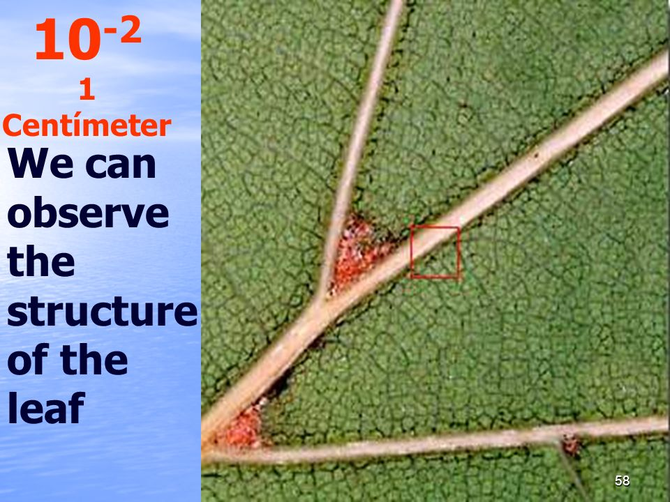 We can observe the structure of the leaf 10 -2 1 Centímeter 58