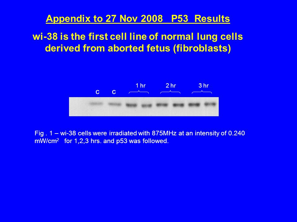 Appendix to 27 Nov 2008 P53 Results wi-38 is the first cell line of normal lung cells derived from aborted fetus (fibroblasts) Fig.