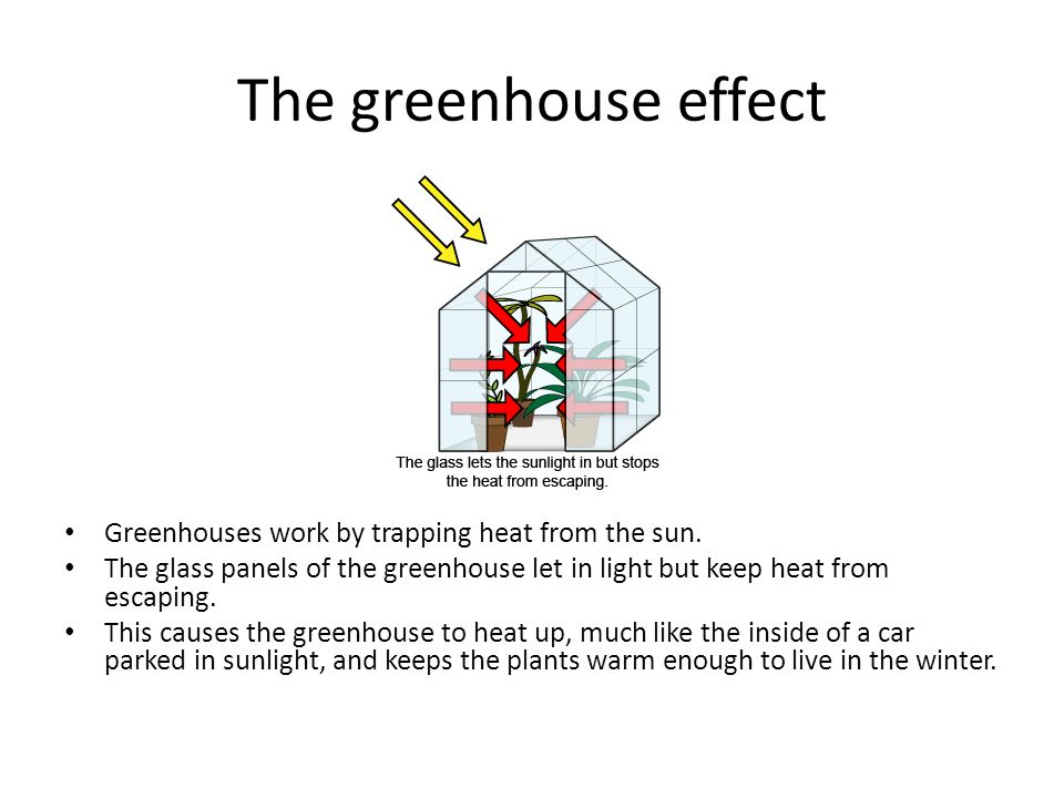 The greenhouse effect Greenhouses work by trapping heat from the sun. The glass panels of the greenhouse let in light but keep heat from escaping. Thi
