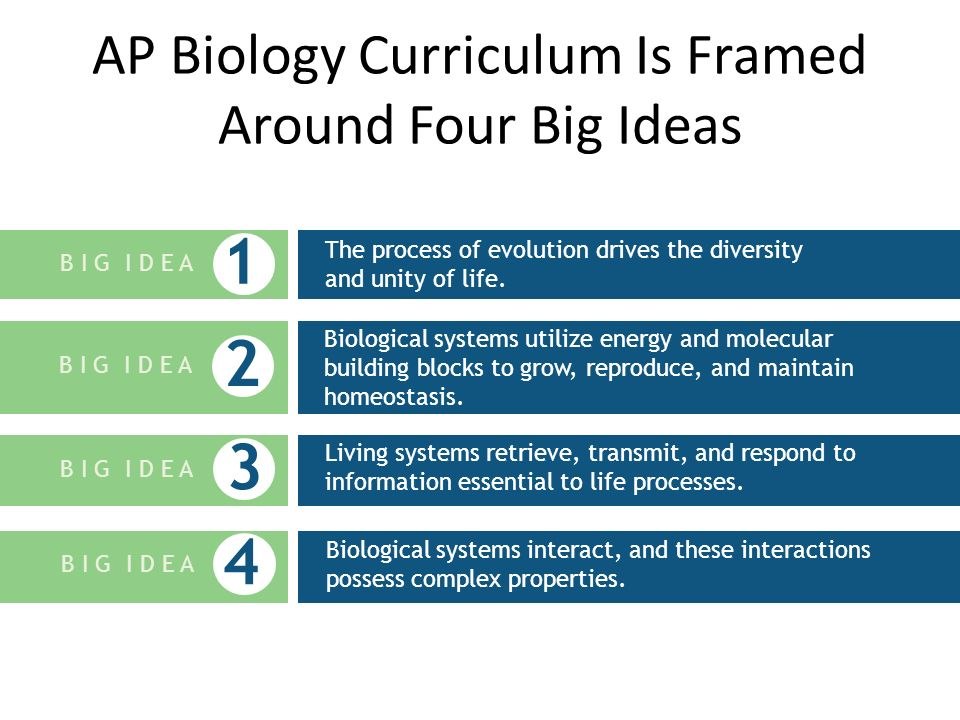 AP Biology Curriculum Is Framed Around Four Big Ideas The process of evolution drives the diversity and unity of life. B I G I D E A 1 Living systems