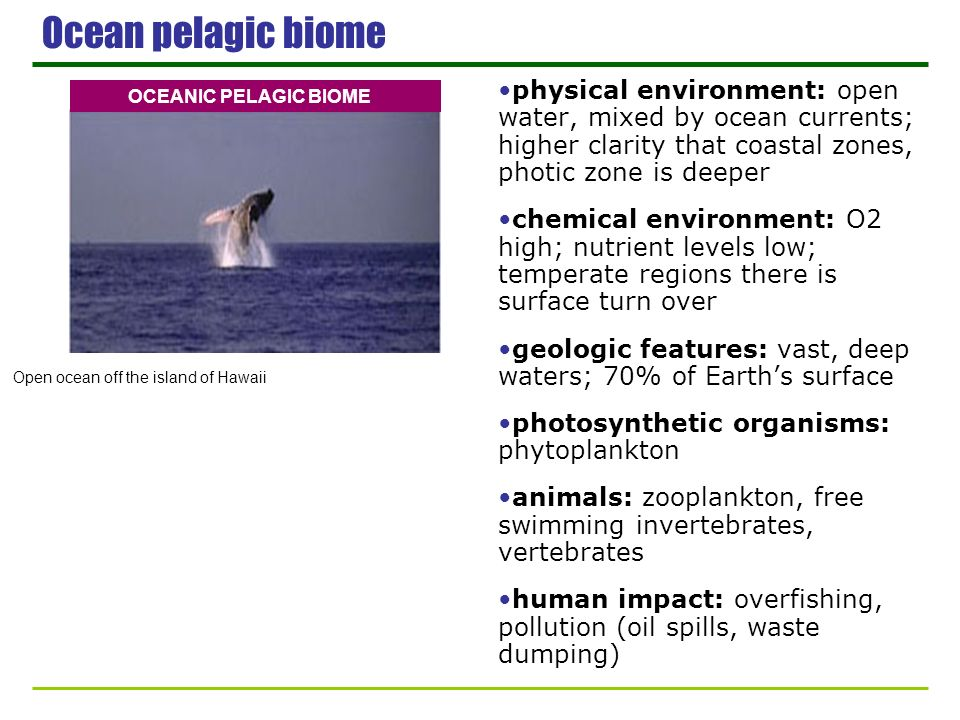 Ocean pelagic biome physical environment: open water, mixed by ocean currents; higher clarity that coastal zones, photic zone is deeper chemical envir
