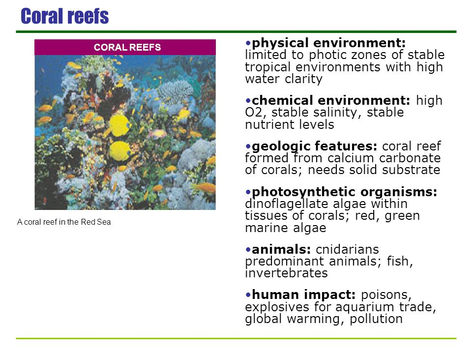 Coral reefs physical environment: limited to photic zones of stable tropical environments with high water clarity chemical environment: high O2, stabl