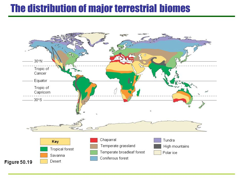 The distribution of major terrestrial biomes 30 N Tropic of Cancer Equator Tropic of Capricorn 30 S Key Tropical forest Savanna Desert Chaparral Tempe