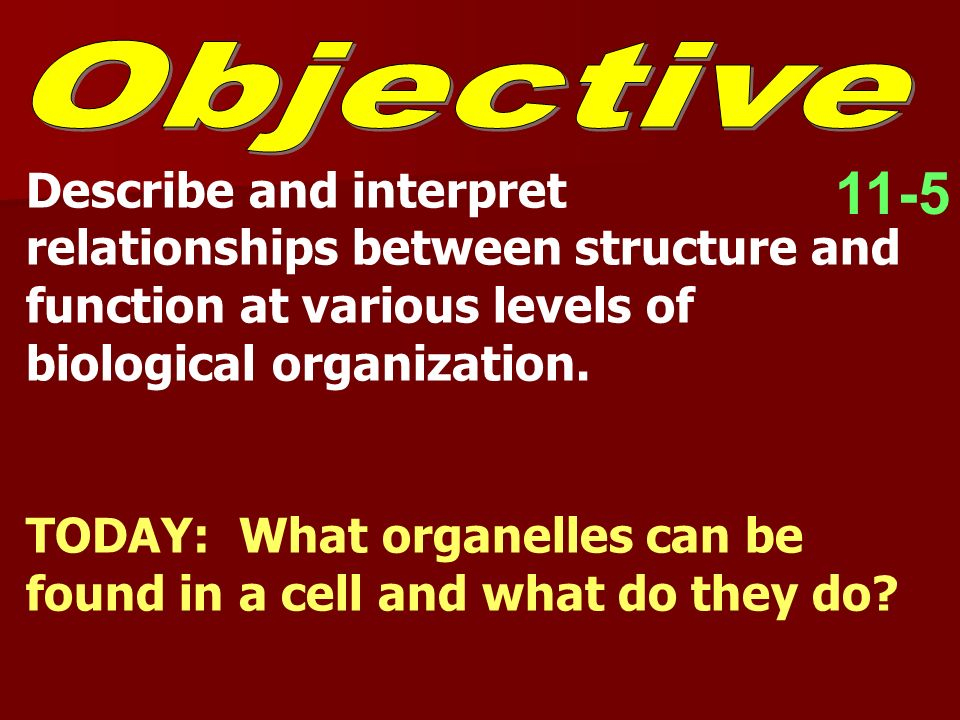 11-5 Describe and interpret relationships between structure and function at various levels of biological organization. TODAY: What organelles can be f