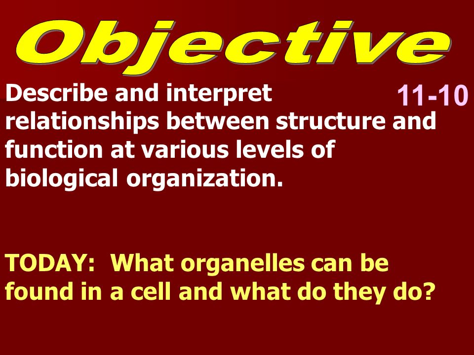 11-10 Describe and interpret relationships between structure and function at various levels of biological organization. TODAY: What organelles can be