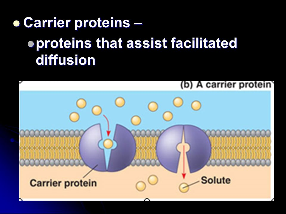 Carrier proteins – Carrier proteins – proteins that assist facilitated diffusion proteins that assist facilitated diffusion