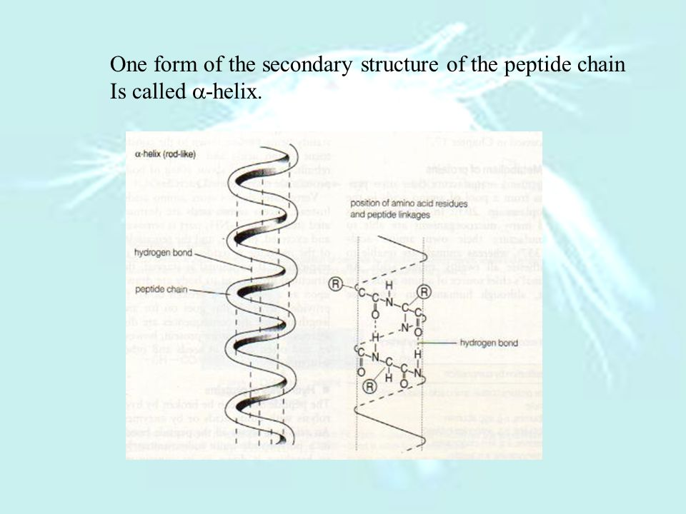 One form of the secondary structure of the peptide chain Is called -helix.