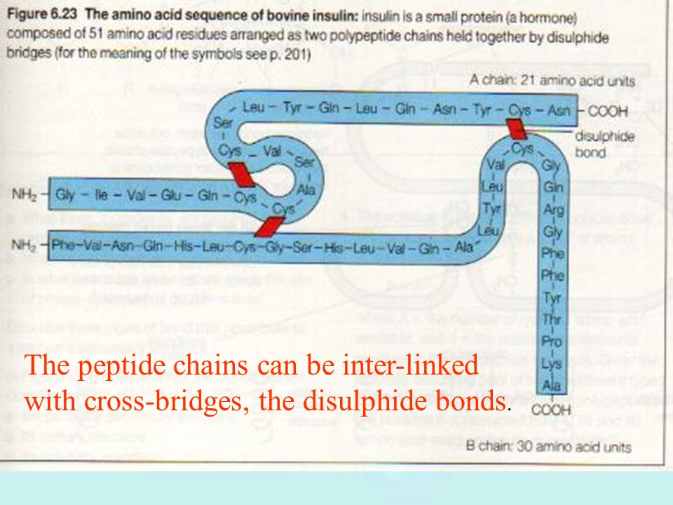 The peptide chains can be inter-linked with cross-bridges, the disulphide bonds.