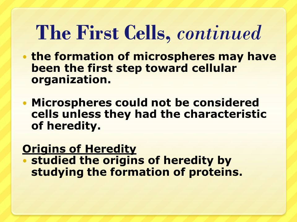 The First Cells, continued the formation of microspheres may have been the first step toward cellular organization. Microspheres could not be consider