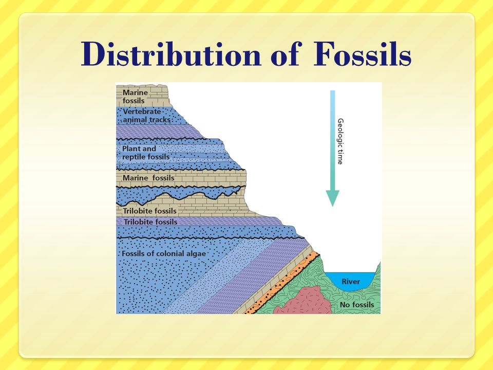 Distribution of Fossils