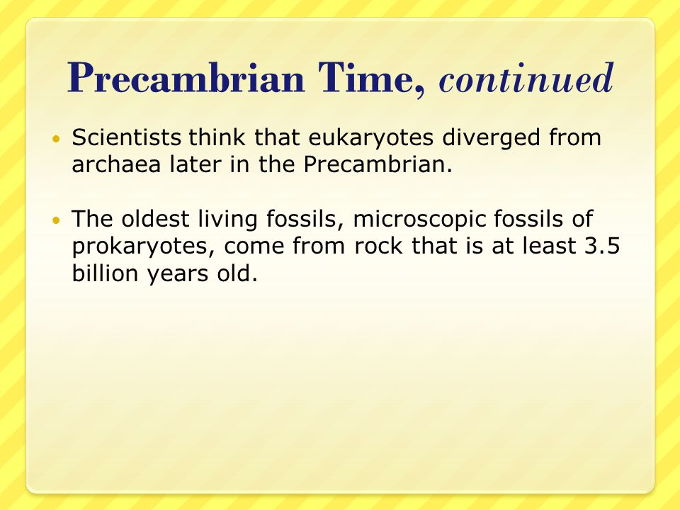 Precambrian Time, continued Scientists think that eukaryotes diverged from archaea later in the Precambrian. The oldest living fossils, microscopic fo