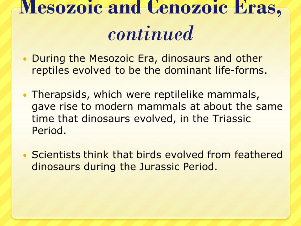 Mesozoic and Cenozoic Eras, continued During the Mesozoic Era, dinosaurs and other reptiles evolved to be the dominant life-forms. Therapsids, which w
