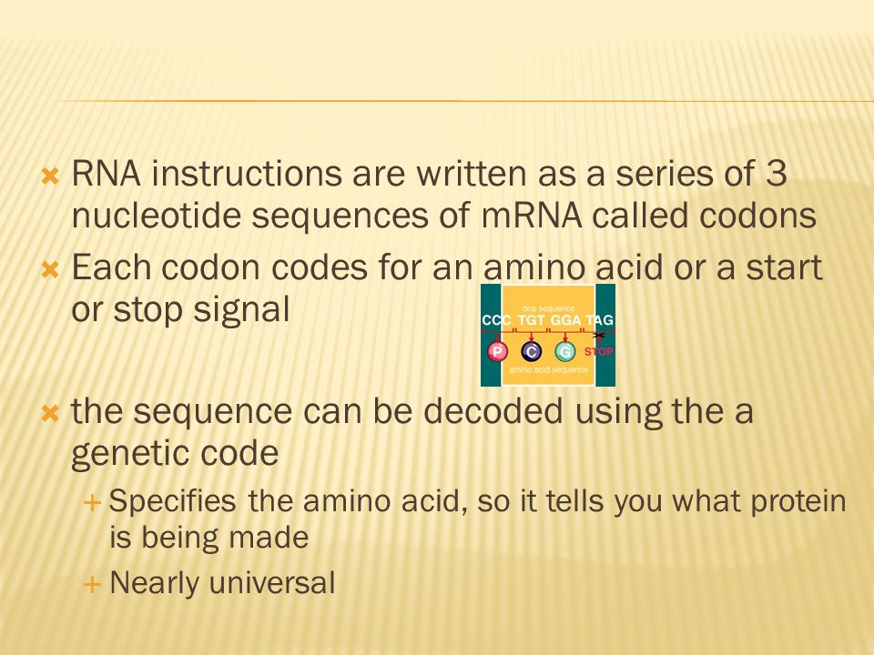 RNA instructions are written as a series of 3 nucleotide sequences of mRNA called codons Each codon codes for an amino acid or a start or stop signal