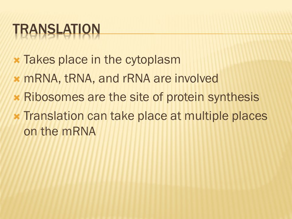 Takes place in the cytoplasm mRNA, tRNA, and rRNA are involved Ribosomes are the site of protein synthesis Translation can take place at multiple plac