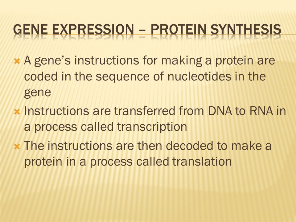 A genes instructions for making a protein are coded in the sequence of nucleotides in the gene Instructions are transferred from DNA to RNA in a proce