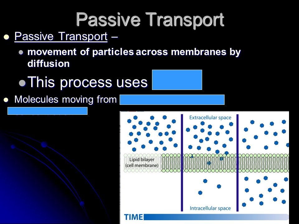 Passive Transport Passive Transport – Passive Transport – movement of particles across membranes by diffusion movement of particles across membranes b