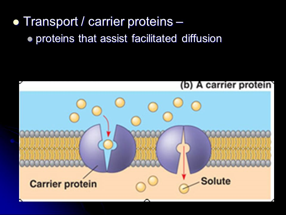 Transport / carrier proteins – Transport / carrier proteins – proteins that assist facilitated diffusion proteins that assist facilitated diffusion