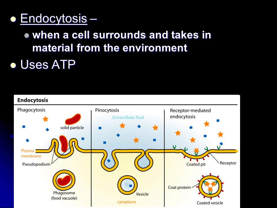 Endocytosis – Endocytosis – when a cell surrounds and takes in material from the environment when a cell surrounds and takes in material from the envi