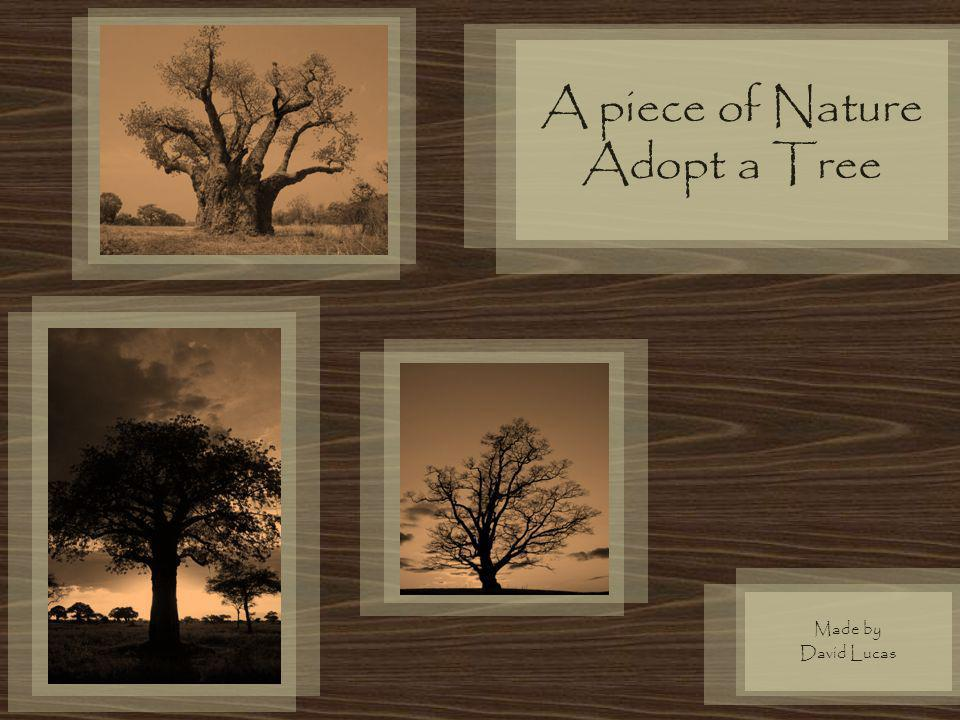 A piece of Nature Adopt a Tree Made by David Lucas