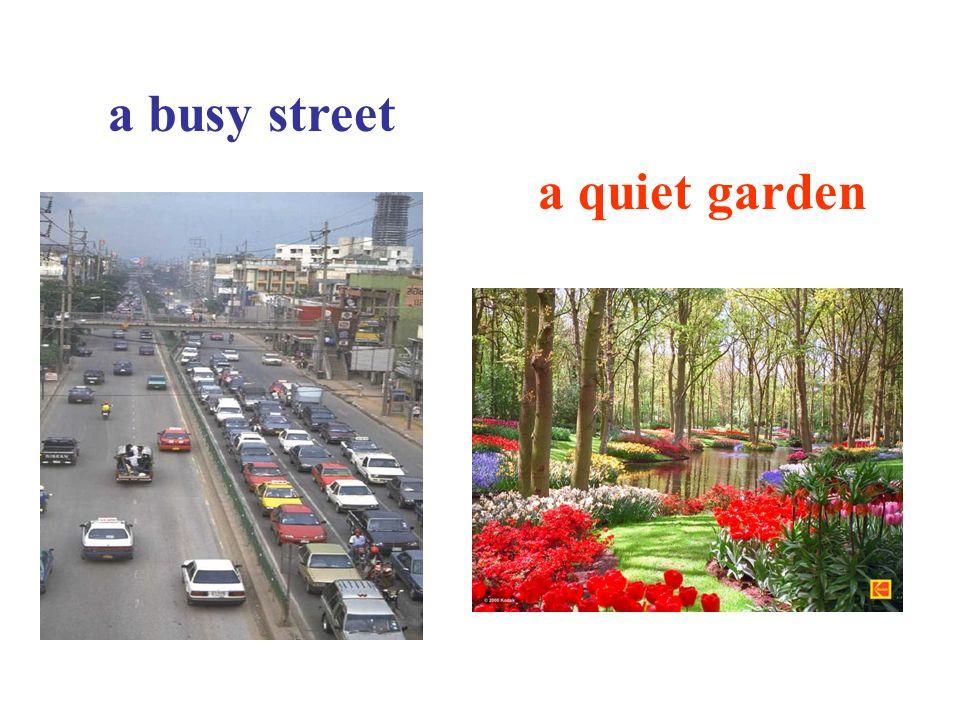 a busy street a quiet garden