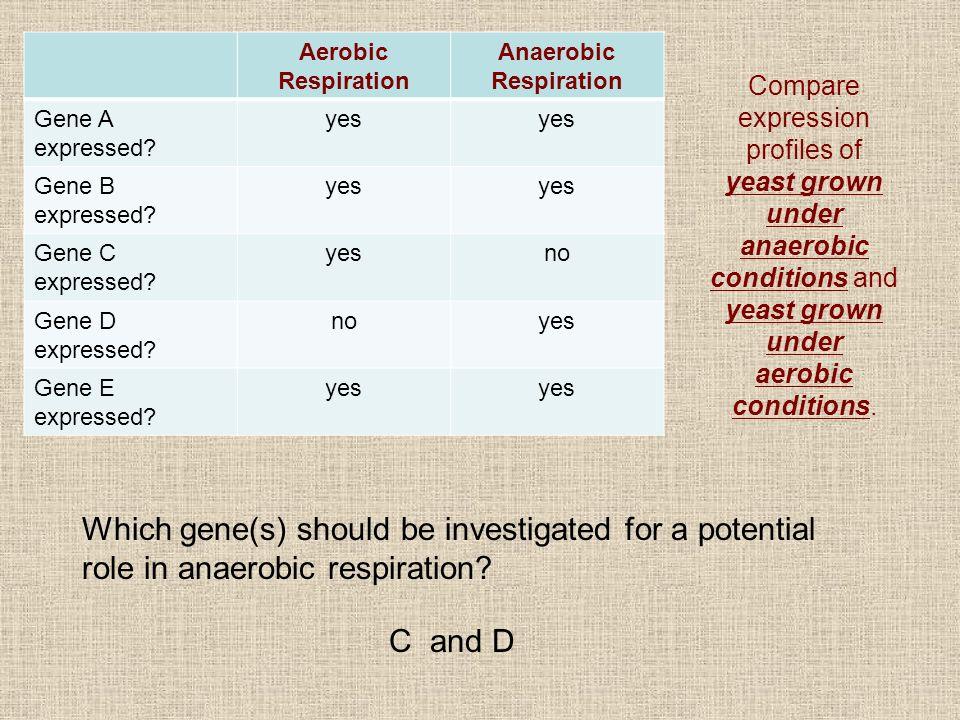 Aerobic Respiration Anaerobic Respiration Gene A expressed? yes Gene B expressed? yes Gene C expressed? yesno Gene D expressed? noyes Gene E expressed