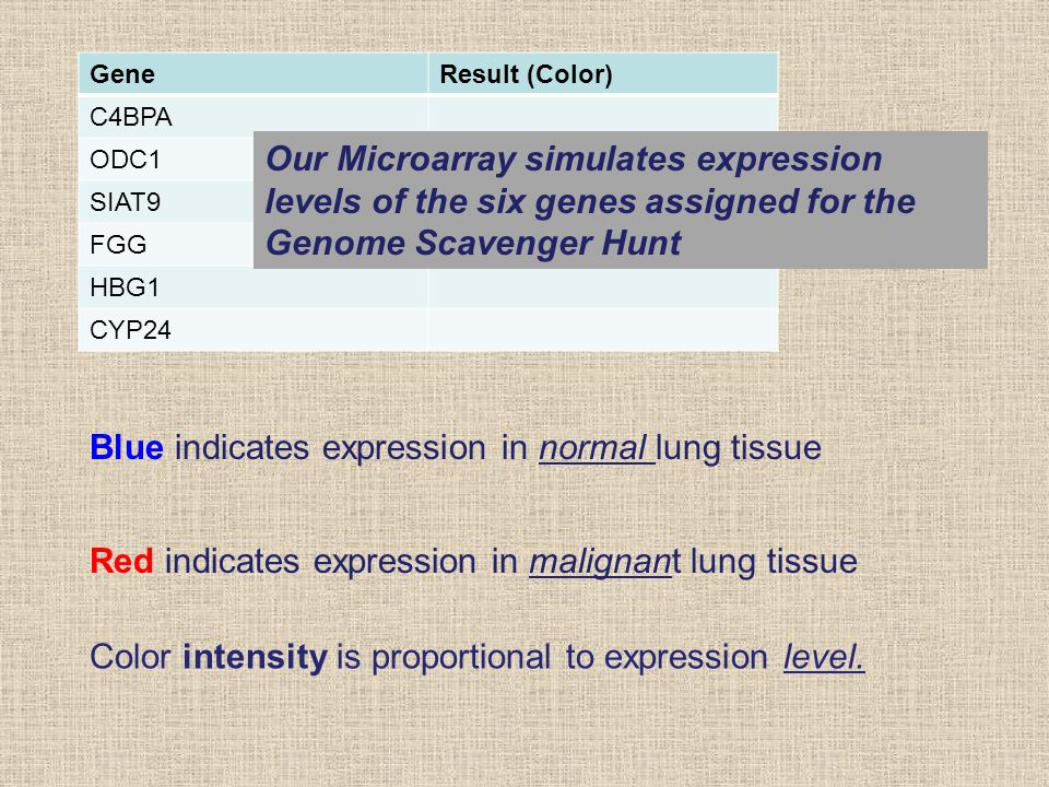 GeneResult (Color) C4BPA ODC1 SIAT9 FGG HBG1 CYP24 Our Microarray simulates expression levels of the six genes assigned for the Genome Scavenger Hunt