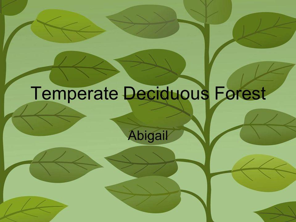 Temperate Deciduous Forest Abigail