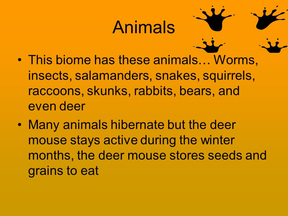 Animals This biome has these animals… Worms, insects, salamanders, snakes, squirrels, raccoons, skunks, rabbits, bears, and even deer Many animals hibernate but the deer mouse stays active during the winter months, the deer mouse stores seeds and grains to eat