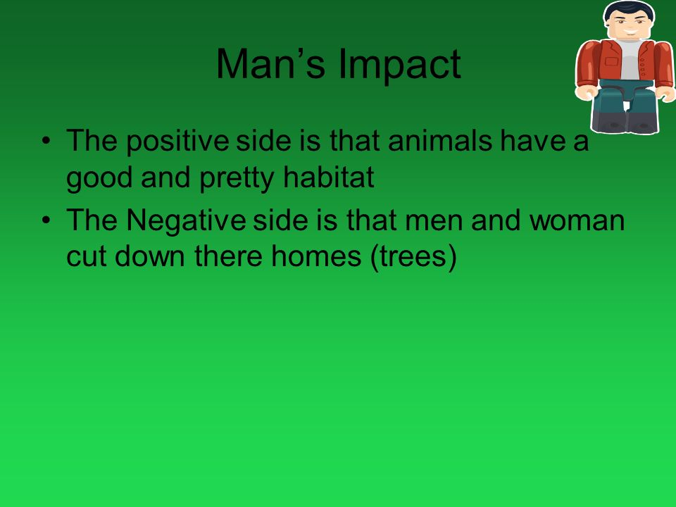Mans Impact The positive side is that animals have a good and pretty habitat The Negative side is that men and woman cut down there homes (trees)