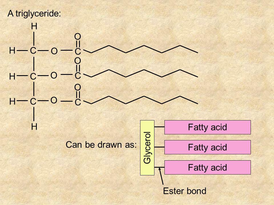 C C C H O H H H H O O C O C O C O A triglyceride: Can be drawn as: Glycerol Fatty acid Ester bond